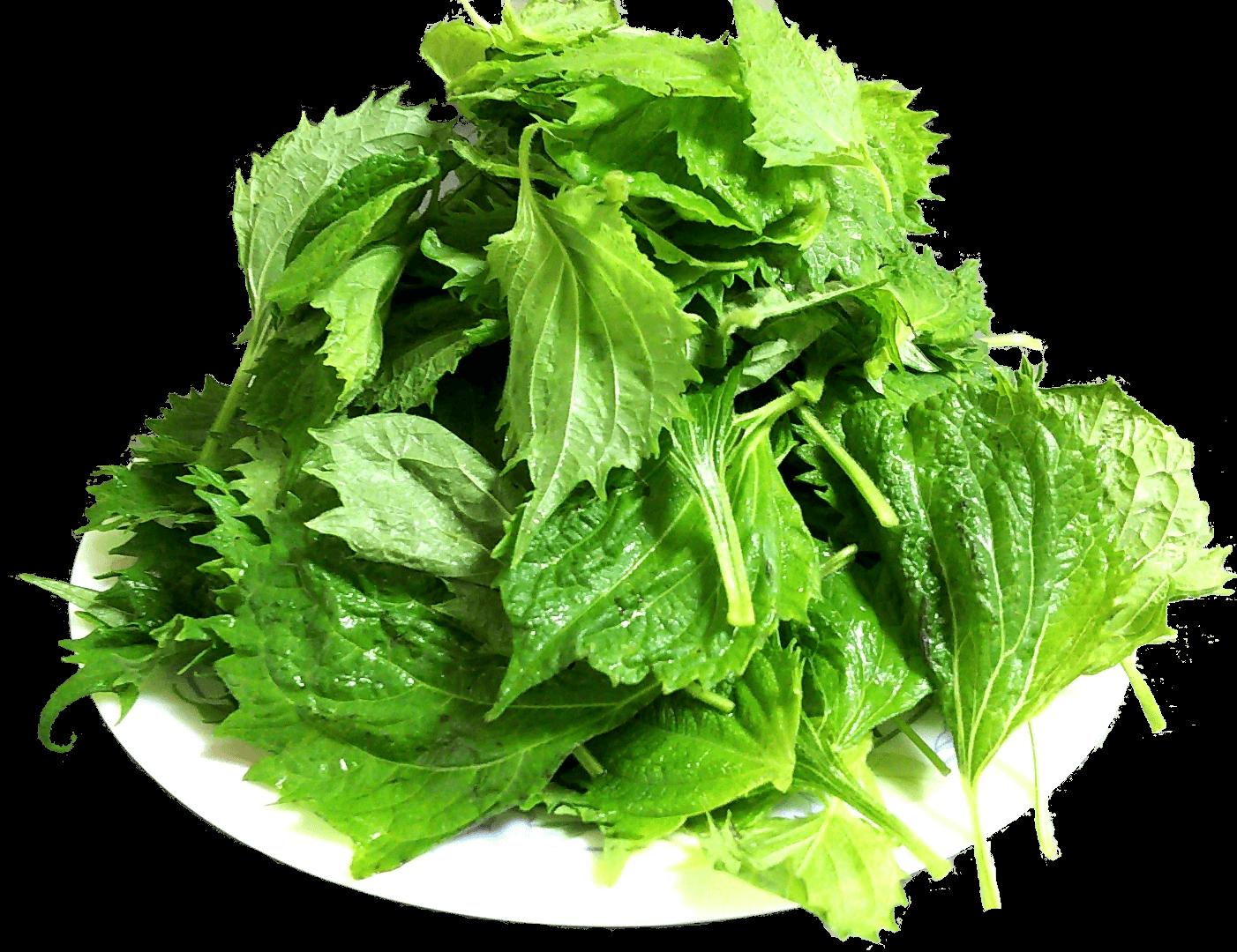 ポラリスのオーガニック野菜:大葉